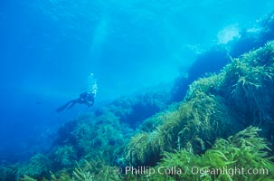Diver, Church Rock, Guadalupe Island (Isla Guadalupe)