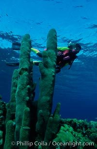 Diver and pillar coral, Roatan