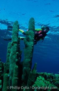 Image 01118, Diver and pillar coral. Roatan, Honduras, Phillip Colla, all rights reserved worldwide. Keywords: caribbean, environment, honduras, landscape, nature, oceans, outdoors, outside, people, roatan, roatan bay islands, scene, scenery, scenic, scuba diver, seascape, underwater, underwater landscape.