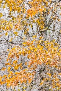 Early Snow and Late Blue Ridge Parkway Fall Colors, Asheville, North Carolina. Asheville, North Carolina, USA, natural history stock photograph, photo id 34647