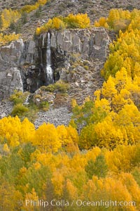 Aspen trees turn yellow and orange in early October, South Fork of Bishop Creek Canyon. Bishop Creek Canyon, Sierra Nevada Mountains, Bishop, California, USA, Populus tremuloides, natural history stock photograph, photo id 17536