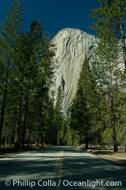 El Capitan and shaded road, Yosemite Valley, El Capitan, copyright Phillip Colla Natural History Photography, www.oceanlight.com, image #06968, all rights reserved worldwide.