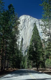 El Capitan and forest road, Yosemite Valley. El Capitan, Yosemite National Park, California, USA, natural history stock photograph, photo id 07028