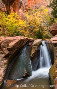 Image 32640, Fall Colors in Kanarra Creek Canyon, Utah. Kanarra Creek, Kanarraville, Utah, USA, Phillip Colla, all rights reserved worldwide. Keywords: autumn, canyon, canyoneering, fall, gorge, hike, hiking, kanarra canyon, kanarra creek, kanarra creek falls, kanarra falls, kanarraville, outdoors, outside, rapids, river, sandstone, scene, scenic, stream, usa, utah, water, waterfall.
