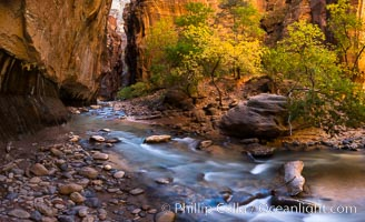 Fall Colors in the Virgin River Narrows, Zion National Park, Utah. Virgin River Narrows, Zion National Park, Utah, USA, natural history stock photograph, photo id 32613