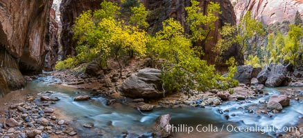 Fall Colors in the Virgin River Narrows, Zion National Park, Utah