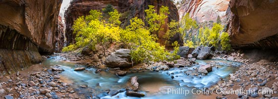 Fall Colors in the Virgin River Narrows, Zion National Park, Utah. Virgin River Narrows, Zion National Park, Utah, USA, natural history stock photograph, photo id 32634