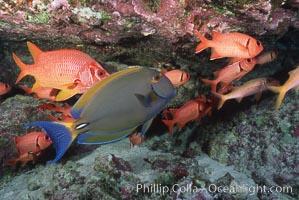 Unidentified fish, Kauai