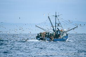 Fishing boat on Monterey Bay, seagulls attracted to bait and nets