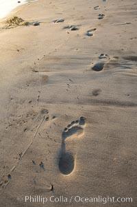 Footprints on a sandy beach, Ponto, Carlsbad, California