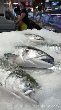 Fresh salmon on ice at the Public Market, Granville Island, Vancouver. Granville Island, Vancouver, British Columbia, Canada, natural history stock photograph, photo id 21206