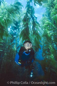Diver in kelp forest, San Clemente Island