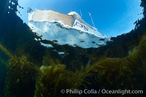 Boat Horizon floats above a kelp forest, underwater, Macrocystis pyrifera, San Clemente Island