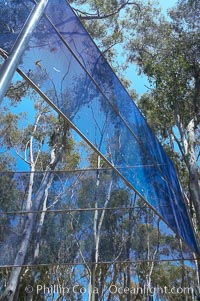 The Giraffe Traps, or what is officially known as Two Running Violet V Forms, was the second piece in the Stuart Collection at University of California San Diego (UCSD).  Commissioned in 1983 and produced by Robert Irwin, the odd fence resides in the eucalyptus grove between Mandeville Auditorium and Central Library. University of California, San Diego, La Jolla, California, USA, natural history stock photograph, photo id 12842