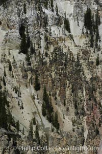 Pine trees and rocky spires dot the yellow-hued sides of Grand Canyon of the Yellowstone, Yellowstone National Park, Wyoming