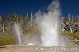 Grand Geyser (right), Turban Geyser (center) and Vent Geyser (left) erupt in concert.  Grand Geyser is a fountain-type geyser reaching 200 feet in height and lasting up to 12 minutes.  Grand Geyser is considered the tallest predictable geyser in the world, erupting about every 12 hours.  It is often accompanied by burst or eruptions from Vent Geyser and Turban Geyser just to its left.  Upper Geyser Basin, Yellowstone National Park, Wyoming
