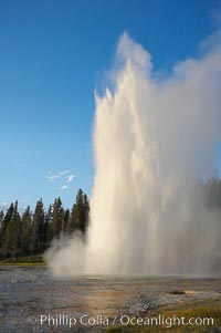 Grand Geyser erupts at sunset. Grand Geyser is a fountain-type geyser reaching 200 feet in height and lasting up to 12 minutes.  Grand Geyser is considered the tallest predictable geyser in the world, erupting about every 12 hours.  It is often accompanied by burst or eruptions from Vent Geyser and Turban Geyser just to its left.  Upper Geyser Basin, Yellowstone National Park, Wyoming