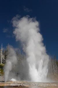 Grand Geyser (right), Turban Geyser (center) and Vent Geyser (left) erupt in concert.  An apron of bacteria covered sinter occupies the foreground when water from the eruptions flows away.  Grand Geyser is a fountain-type geyser reaching 200 feet in height and lasting up to 12 minutes.  Grand Geyser is considered the tallest predictable geyser in the world, erupting about every 12 hours.  It is often accompanied by burst or eruptions from Vent Geyser and Turban Geyser just to its left.  Upper Geyser Basin, Yellowstone National Park, Wyoming