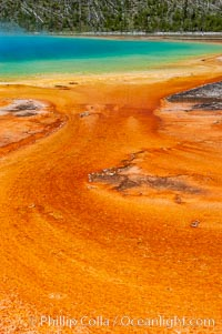 Grand Prismatic Spring displays brilliant colors along its edges, created by species of thermophilac (heat-loving) bacteria that thrive in narrow temperature ranges. The outer orange and red regions are the coolest water in the spring, where the overflow runs off, Midway Geyser Basin, Yellowstone National Park, Wyoming