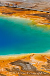 Grand Prismatic Spring displays a stunning rainbow of colors created by species of thermophilac (heat-loving) bacteria that thrive in narrow temperature ranges.  The blue water in the center is too hot to support any bacterial life, while the outer orange rings are the coolest water.  Grand Prismatic Spring is the largest spring in the United States and the third-largest in the world.  Midway Geyser Basin. Midway Geyser Basin, Yellowstone National Park, Wyoming, USA, natural history stock photograph, photo id 13583