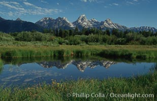 The Teton Range is reflected in a calm sidewater of the Snake River near Blacktail Ponds, summer, Grand Teton National Park, Wyoming