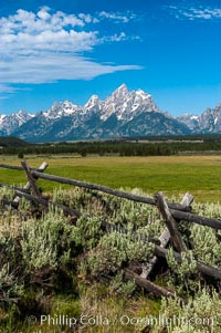 Buck and rail fence, Grand Teton National Park, Wyoming