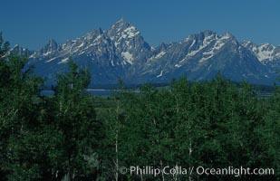 The Teton Range and Aspens, summer, Grand Teton National Park, Wyoming