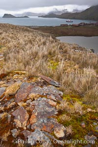 Grassy windy highlands and rocks, overlooking Stromness Bay. Stromness Harbour, South Georgia Island, natural history stock photograph, photo id 24611
