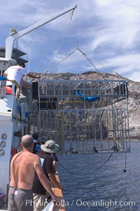 The SharkDiver.com crew, aboard the long range San Diego vessel Ocean Odyssey, lifts a custom-made aluminum shark cage from the shark-filled waters of Isla Guadalupe, far offshore of the Pacific Coast of Baja California.  Guadalupe Island is host to a concentration of large great white sharks, which visit the island to feed on pinnipeds and tuna, Carcharodon carcharias, Guadalupe Island (Isla Guadalupe)