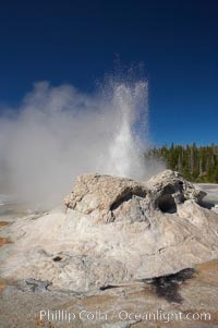 Grotto Geyser erupts.  Upper Geyser Basin, Yellowstone National Park, Wyoming