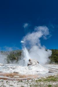 Grotto Geyser, Yellowstone National Park, Upper Geyser Basin