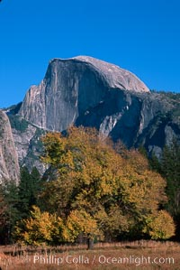 Half Dome, autumn. Half Dome, Yosemite National Park, California, USA, natural history stock photograph, photo id 02348