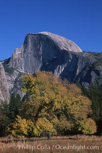 Half Dome and oak tree, Yosemite National Park, California