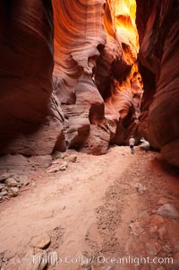 Hiker in Buckskin Gulch.  A hiker considers the towering walls and narrow passageway of Buckskin Gulch, a dramatic slot canyon forged by centuries of erosion through sandstone.  Buckskin Gulch is the worlds longest accessible slot canyon, running from the Paria River toward the Colorado River.  Flash flooding is a serious danger in the narrows where there is no escape, Paria Canyon-Vermilion Cliffs Wilderness, Arizona
