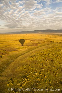 Hot Air Ballooning over Maasai Mara plains, Kenya. Maasai Mara National Reserve, Kenya, natural history stock photograph, photo id 29820