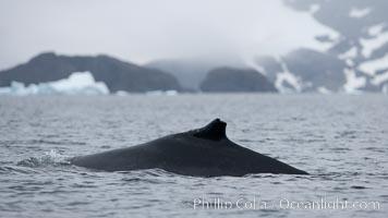 Humpback whale in Antarctica, Cierva Cove