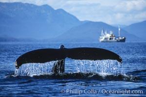 Humpback whale raising its fluke (tail) prior to a dive. Frederick Sound, Alaska, USA, Megaptera novaeangliae, natural history stock photograph, photo id 04228
