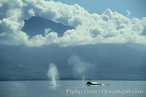Humpback whales at the surface, volcano and clouds, Megaptera novaeangliae, Maui