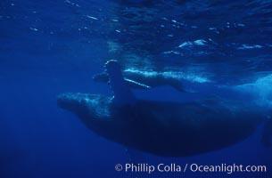 Humpback whale mother and calf. Maui, Hawaii, USA, Megaptera novaeangliae, natural history stock photograph, photo id 04429