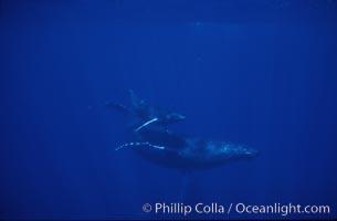 Humpback whale mother and calf. Maui, Hawaii, USA, Megaptera novaeangliae, natural history stock photograph, photo id 04480