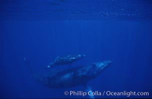 Humpback whale mother and calf. Maui, Hawaii, USA, Megaptera novaeangliae, natural history stock photograph, photo id 04483