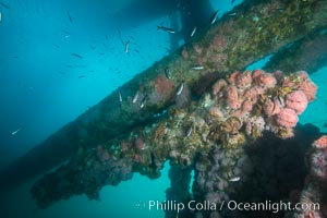 Oil Rig Ellen underwater structure covered in invertebrate life. Long Beach, California, USA, natural history stock photograph, photo id 31111