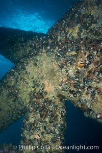 Oil Rig Elly underwater structure covered in invertebrate life. Long Beach, California, USA, natural history stock photograph, photo id 31138