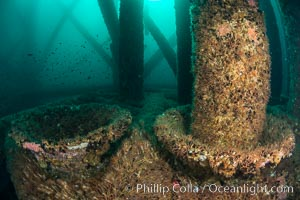 Invertebrate life covers the undersea pilings of a oil platform, Long Beach, California
