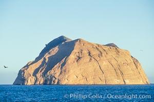 Isla Adentro, Guadalupe Island (Isla Guadalupe)
