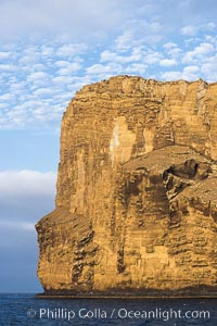 Isla Afuera is a volcanic plug towering 700 feet above the ocean near the south end of Guadalupe Island.  Its steep cliffs extend underwater hundreds of feet offering spectacular wall diving and submarine topography, Guadalupe Island (Isla Guadalupe)
