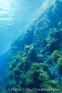 Isla Afuera, Guadalupe Island, Mexico, Guadalupe Island (Isla Guadalupe)