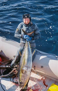Joe Tobin with yellowfin tuna, Guadalupe Island, Mexico, Guadalupe Island (Isla Guadalupe)