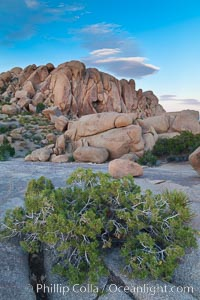 Desert southwest scenic in Joshua Tree National Park, California