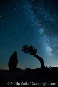 Juniper and Standing Rock with Milky. Joshua Tree National Park, California, USA, natural history stock photograph, photo id 27816